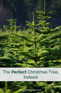 What Makes a Christmas Tree Perfect + #ShareATree