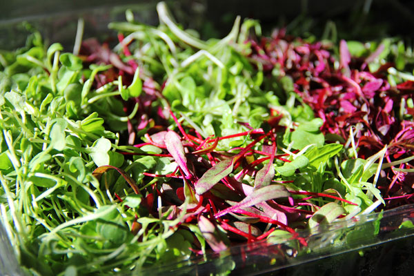 It's easier than you think to eat plenty of leafy greens in the winter!
