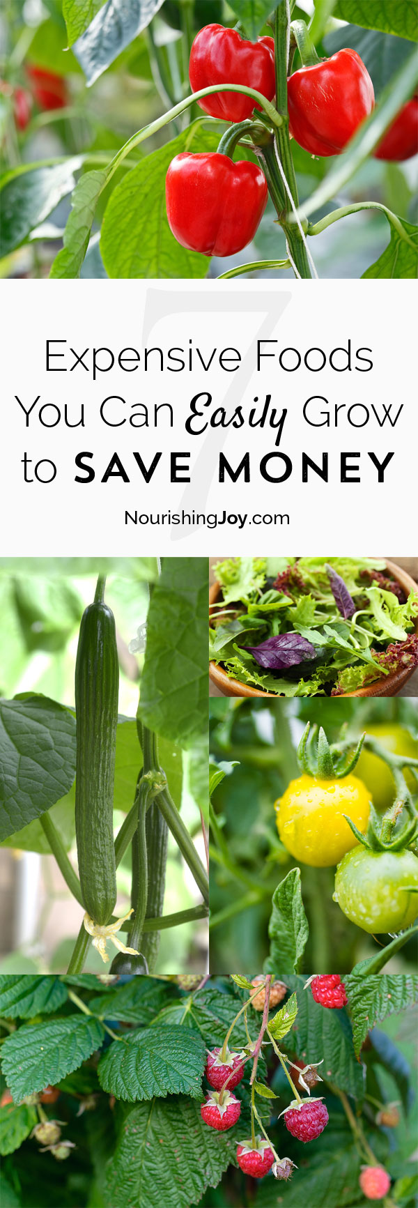 Some groceries are SO expensive! Save significant money each year by growing these otherwise expensive foods.