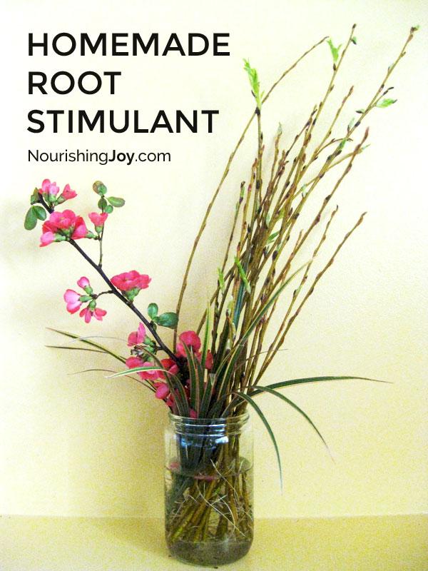 Natural Homemade Root Stimulant