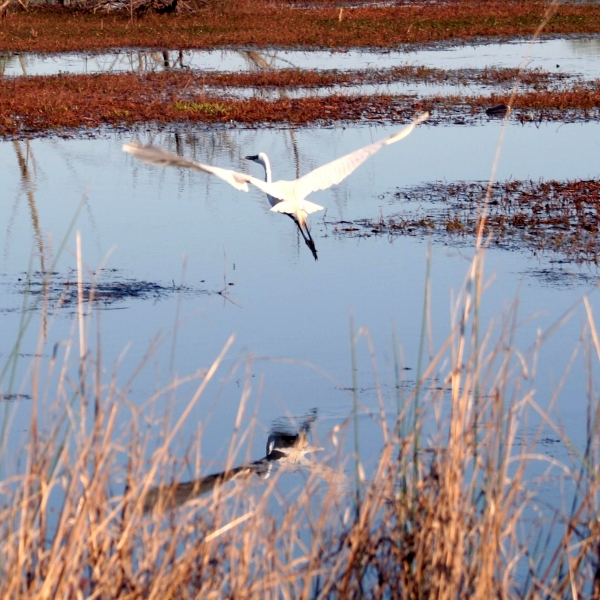 Birdlegs Photography