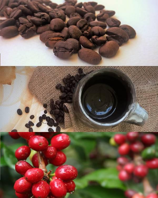 SignPost Coffee
