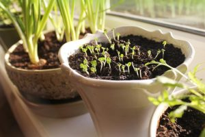 Growing your own herb garden is seriously satisfying and blissfully simple. Whether you're using herbs as medicine or adding them to meals to take your dishes to new heights, these seven tips will help you get the most out of your indoor herb garden.
